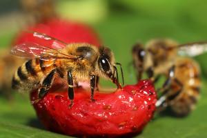 Randka z pszczółką